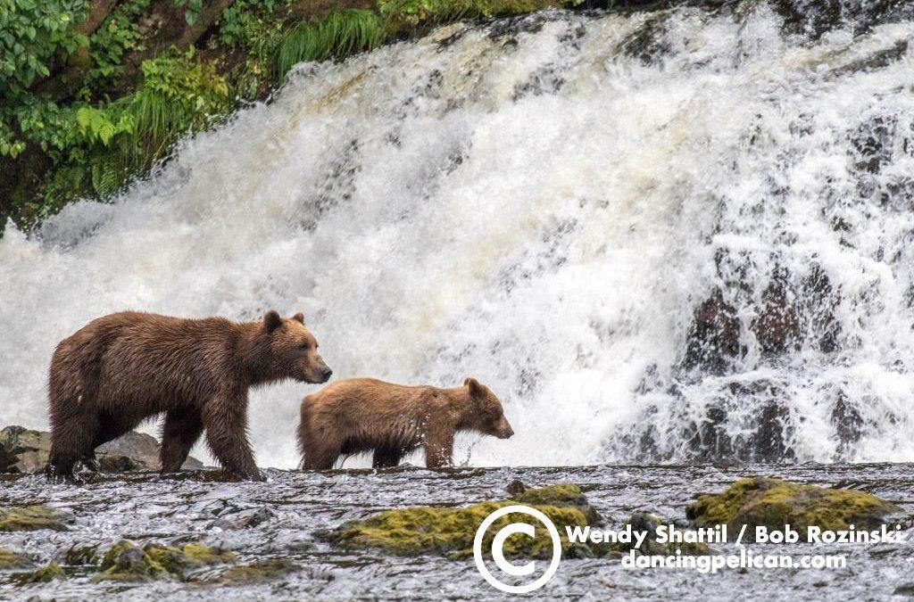 Best of Southeast Alaska